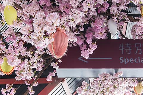 tokyotower_sakura04.jpg